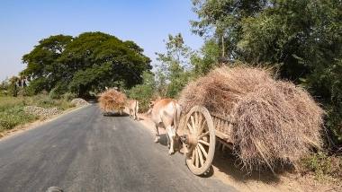Traditional farming, Myanmar.